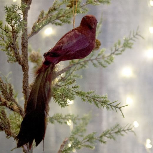 Danish Collection Feather Longtail Bird - Burgundy