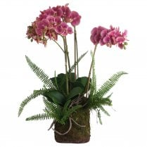 Danish Collection Large Pink Orchid and Fern in Rootball