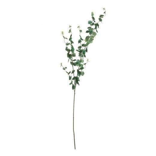 Danish Collection Long Stem Eucalyptus Cineraria Stem