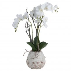 Danish Collection White Orchid in Stone Pot
