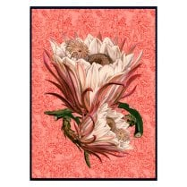 Vanilla Fly Large Paisley Poster 70x100 - Rose