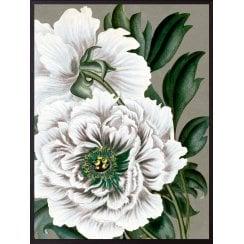 Vanilla Fly Peony Poster - White